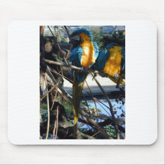 blue and gold macaw mousepads