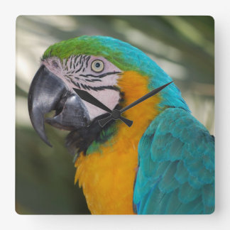 Blue and Gold Macaw Parrot Clock