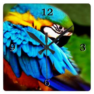 Blue and Gold Macaw Photo Square Wallclocks