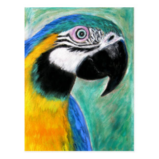 Blue and Gold Macaw - Postcard