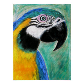 Blue And Gold Macaw Poster