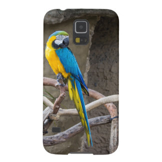 Blue and Gold Macaw Samsung Galaxy S5 case