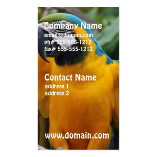 Blue and Gold Macaw with Wings Spread Pack Of Standard Business Cards