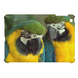Blue and Gold Macaws iPad Mini Case For The iPad Mini