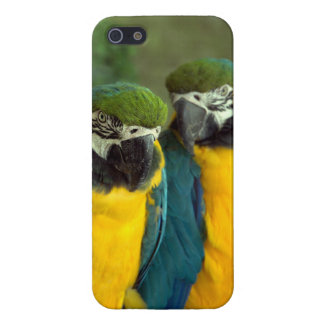 Blue and Gold Macaws iPhone 5/5S Glossy Case For iPhone 5/5S