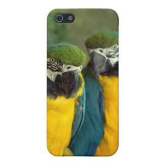Blue and Gold Macaws iPhone 5/5S iPhone 5 Case
