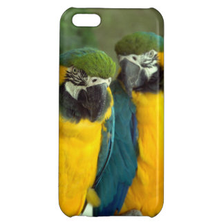 Blue and Gold Macaws iPhone 5C Glossy iPhone 5C Case