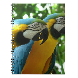 Blue and Gold Macaws Notebook