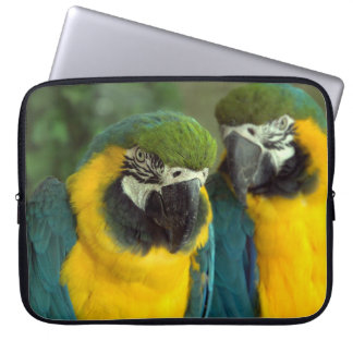 Blue and Gold Macaws soft sleeve Laptop Sleeves