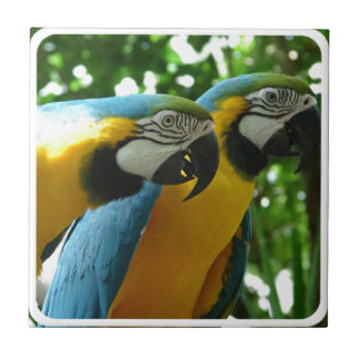 Blue and Gold Macaws Tile