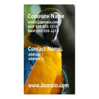 Blue and Gold Parrot Business Cards