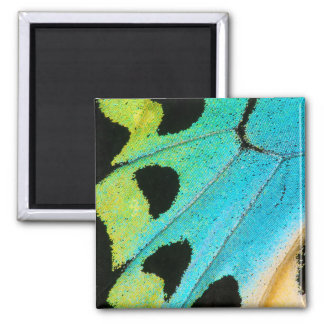blue and green butterfly wing square magnet