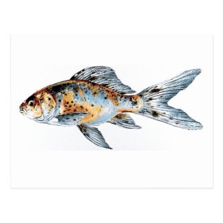 Blue and Orange Shubunkin Goldfish Fish Drawing Postcard