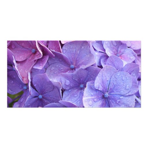Blue and pink hortensia close up picture card