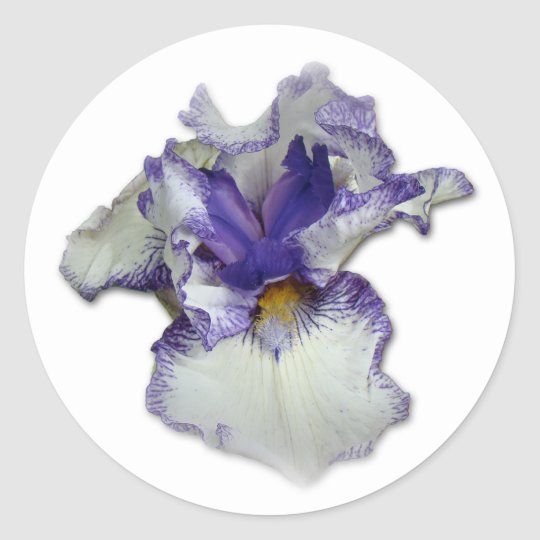 Blue and White Bearded Iris Flower Classic Round