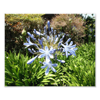 Blue And White Flowers Photo Print