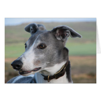 Blue and white greyhound (a346) card