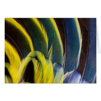 Blue And Yellow Feather Design Card
