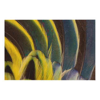 Blue And Yellow Feather Design Wood Print