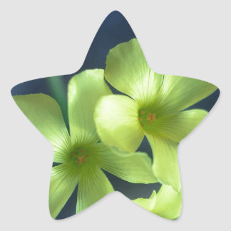 Blue and Yellow Flowers Star Sticker