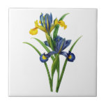 Blue and Yellow Iris By Redoute Small Square Tile