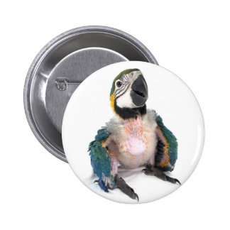 Blue and yellow Macaw 6 Cm Round Badge