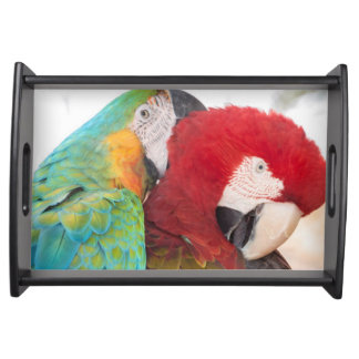 Blue-and-Yellow Macaw and Scarlett Macaw Serving Tray