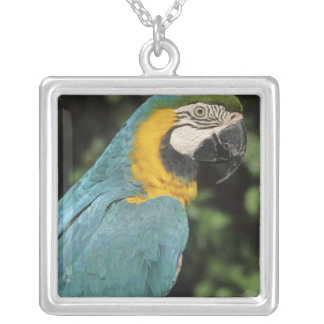 Blue and Yellow Macaw, Ara aurarana), Silver Plated Necklace
