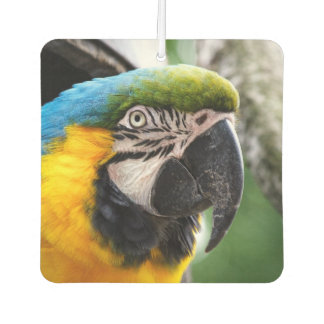 Blue and yellow macaw. car air freshener
