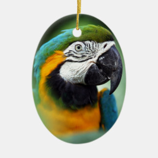 Blue-and-yellow Macaw Christmas Ornament