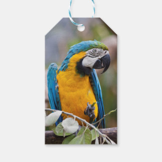 Blue and Yellow Macaw Gift Tags