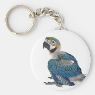 Blue and yellow Macaw Key Ring