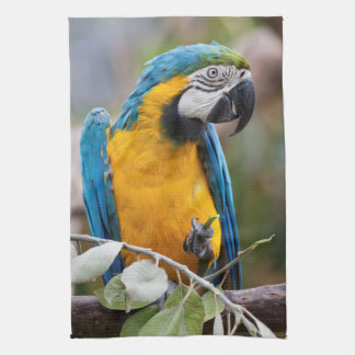 Blue and Yellow Macaw Kitchen Towel