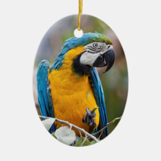 Blue and Yellow Macaw Ornament