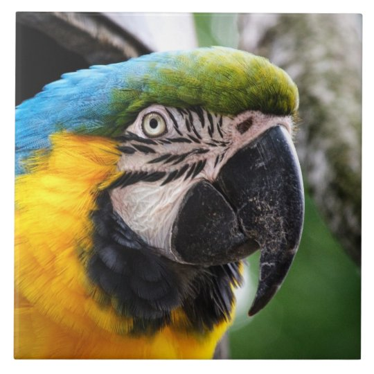 Blue and yellow macaw tile