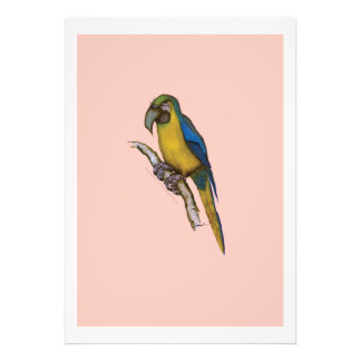 blue-and-yellow macaw, tony fernandes photographic print
