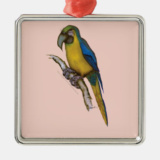 blue-and-yellow macaw, tony fernandes.tif christmas ornament