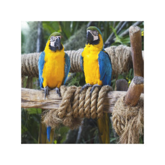 Blue and Yellow Macaw Wrapped Canvas