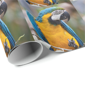 Blue and Yellow Macaw Wrapping Paper