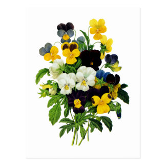 Blue and Yellow Pansies by Pierre Joseph Redoute Postcard