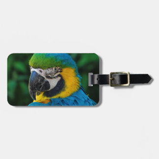 Blue and Yellow Parrot Luggage Tag
