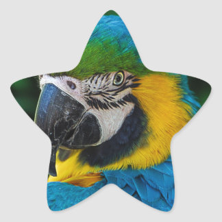 Blue and Yellow Parrot Star Sticker