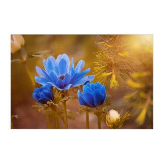 Blue Anemone Flower Blossoms Acrylic Wall Art