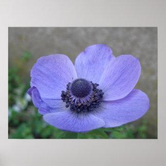 Blue Anemone Macro Print