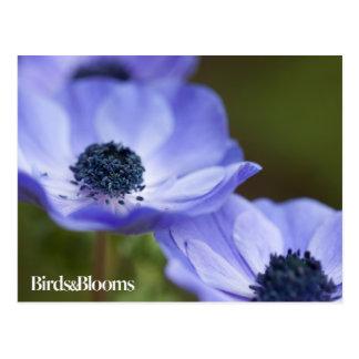 Blue Anemone Postcard