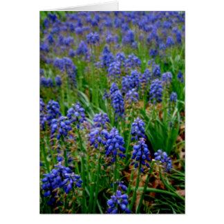 Blue Armenian Hyacinth Notecard
