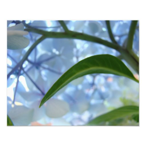 Blue art prints nature Hydrangea Floral artwork Photo