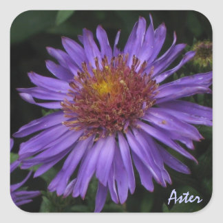 Blue Aster Sticker