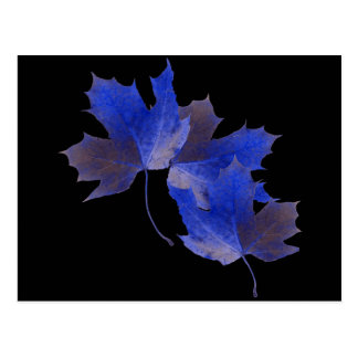 Blue Autumn Leaves Postcard