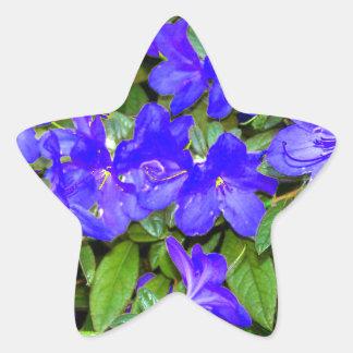 Blue Azalea Flowers Star Sticker